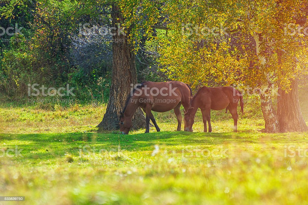 Horses in mountain ranch stock photo