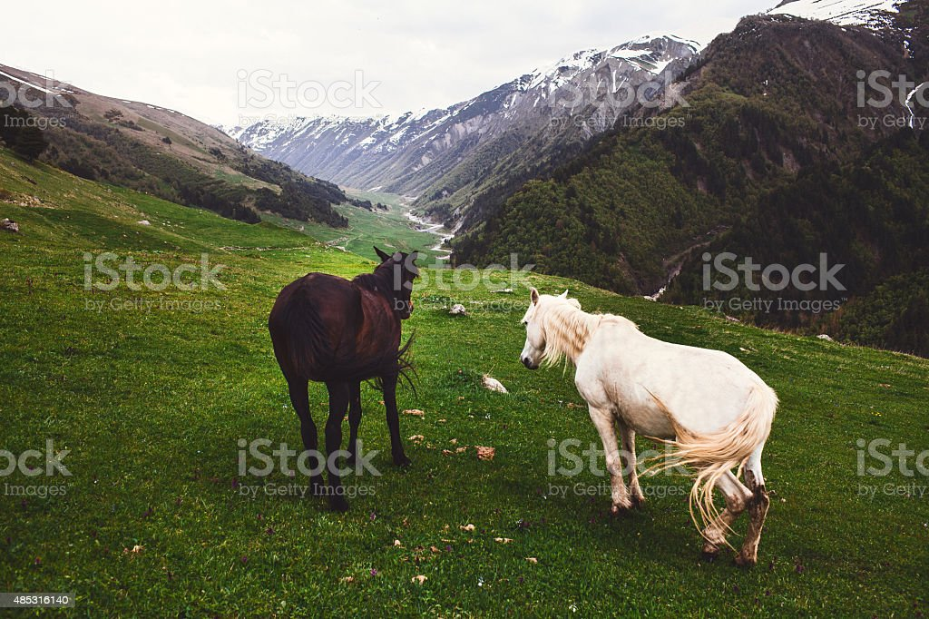 Horses in mountains stock photo