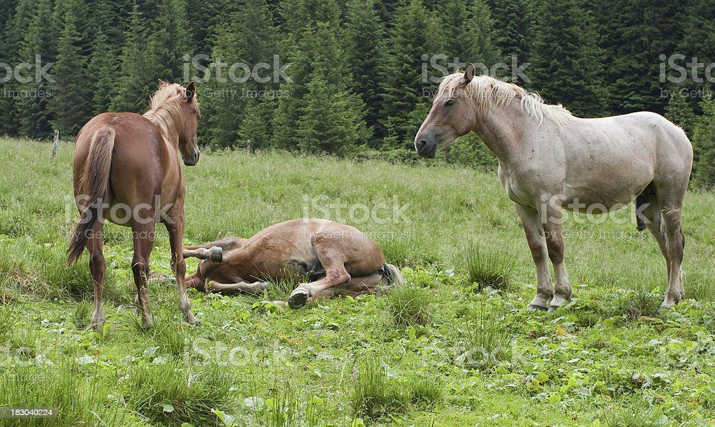Horses In Nature royalty-free stock photo