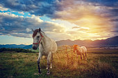 horses in nature
