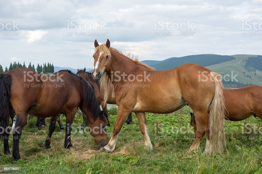 Horses In Nature stock photo