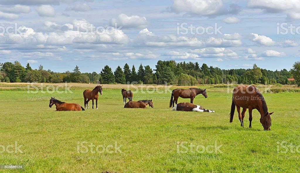 Horses in pasture. Rural landscape stock photo