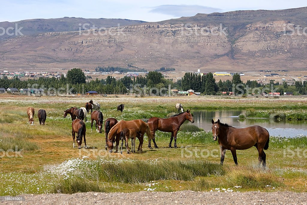 Horses in Patagonia royalty-free stock photo