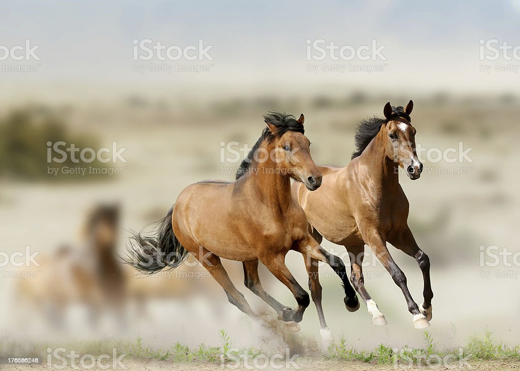 horses in prairies stock photo