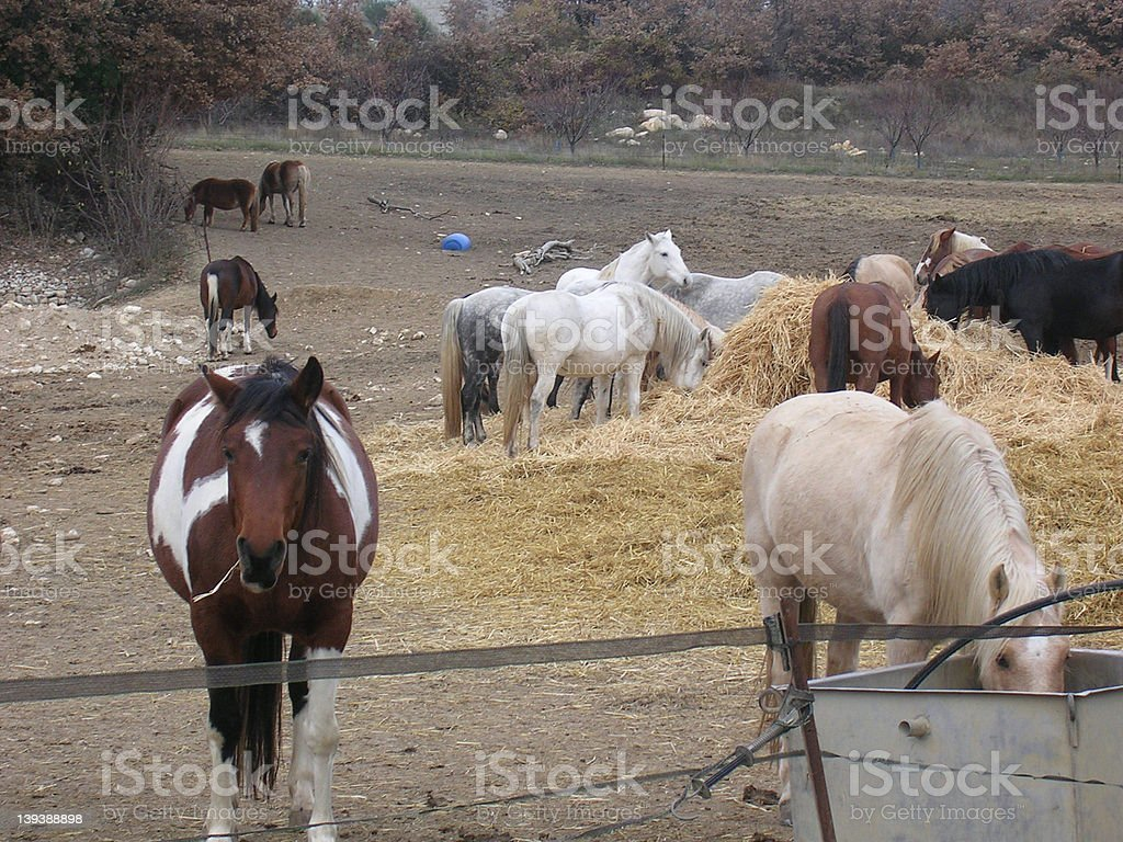 Horses in Provence 2 stock photo