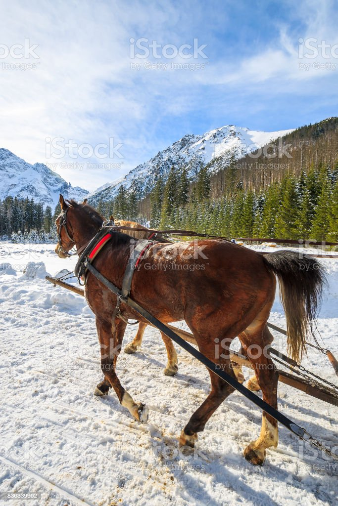 Horses in sleigh carriage near Morskie Oko lake in winter, High Tatra Mountains, Poland stock photo