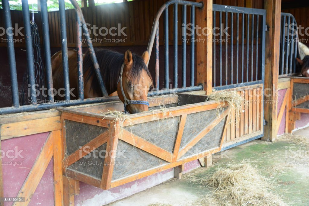 Horses in stable are eating grass. stock photo