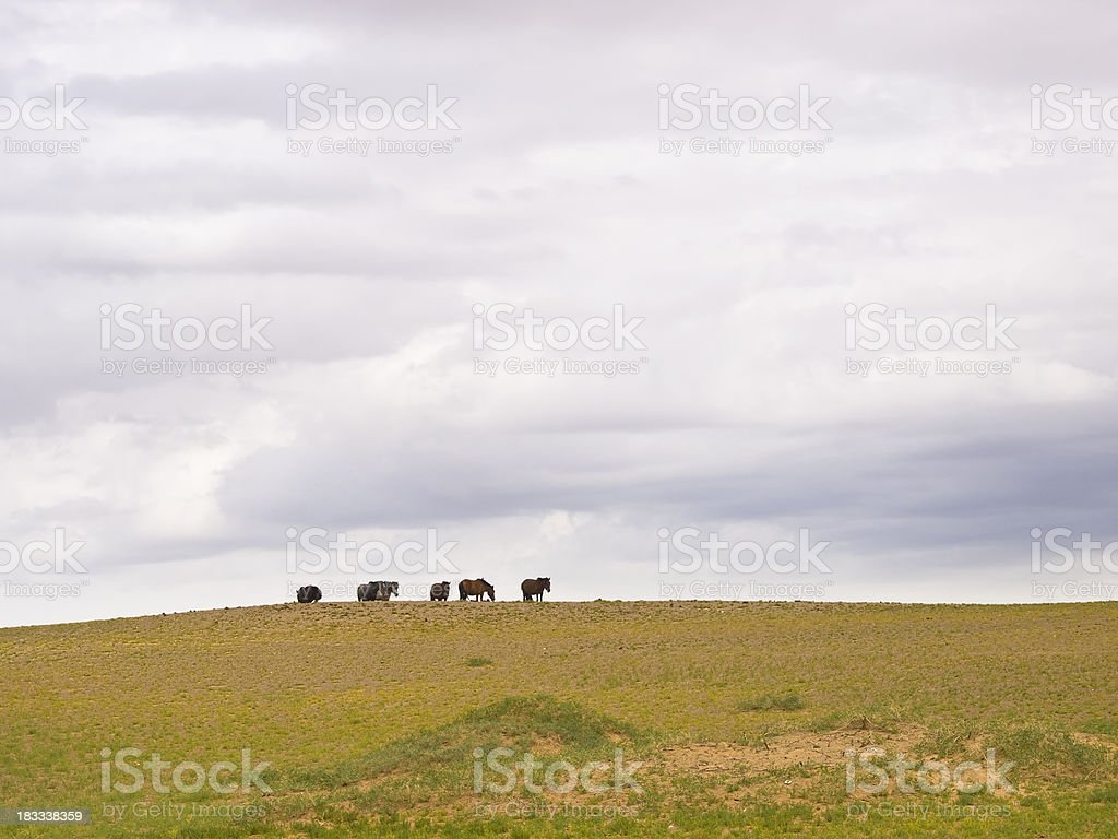 horses in steppe royalty-free stock photo