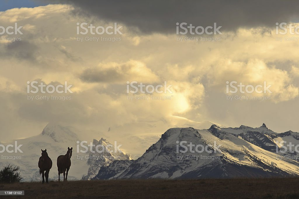 Horses in the Andes royalty-free stock photo