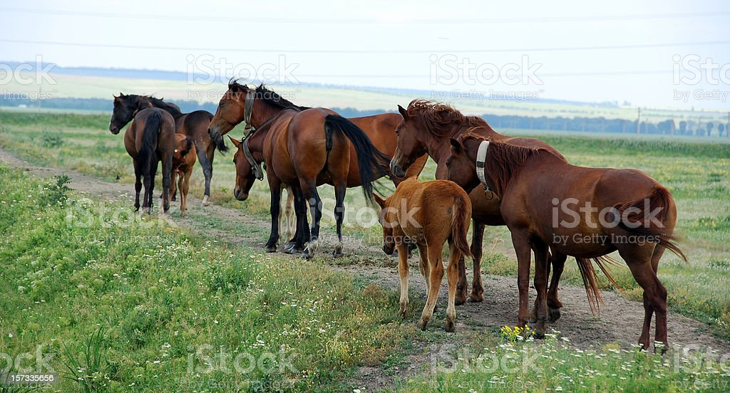 Horses in the country series stock photo
