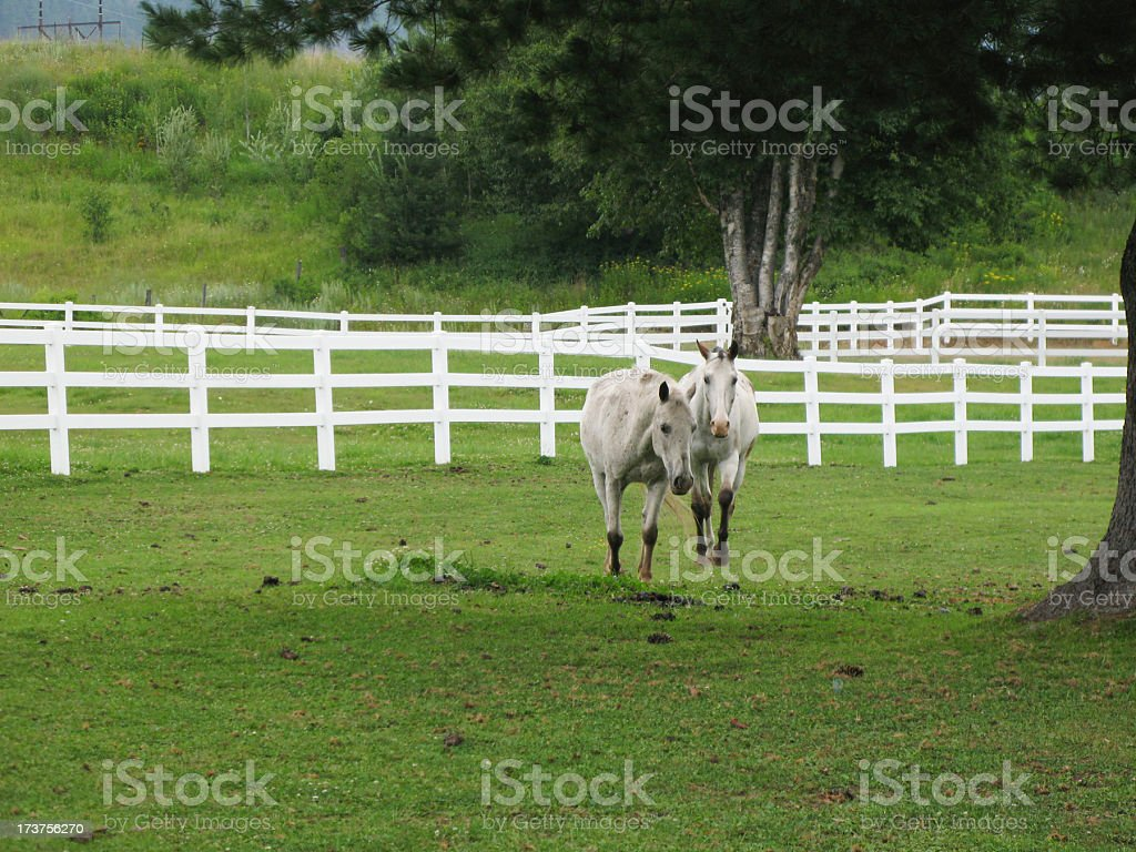 Horses in the field. stock photo