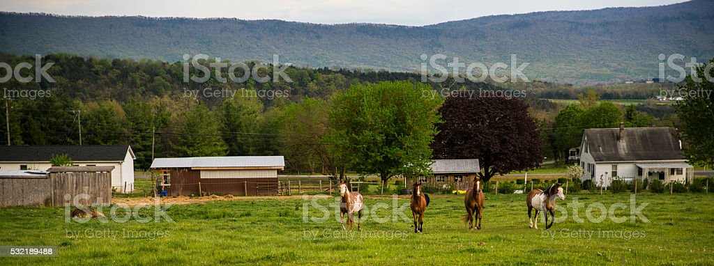 Horses in the fields near by Timberville, Virginia stock photo
