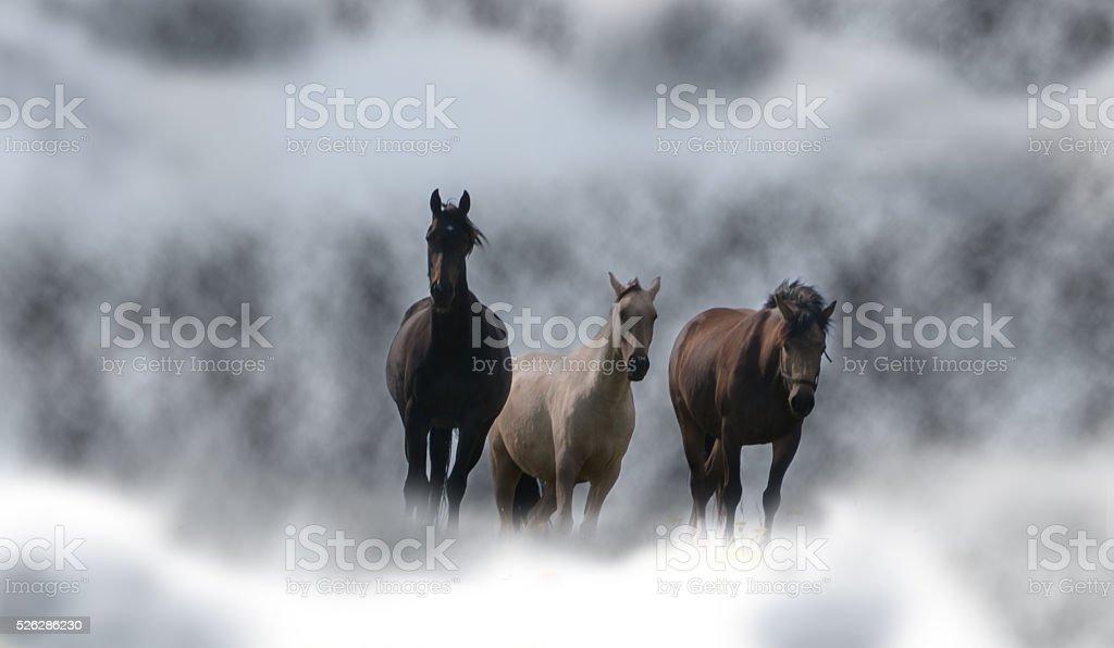 Horses in the fog. stock photo