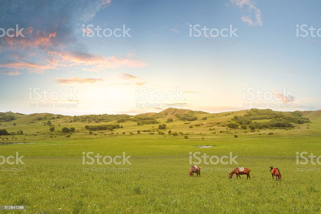 Horses in the grass stock photo