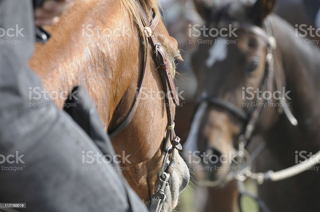 Horses in the mirror royalty-free stock photo