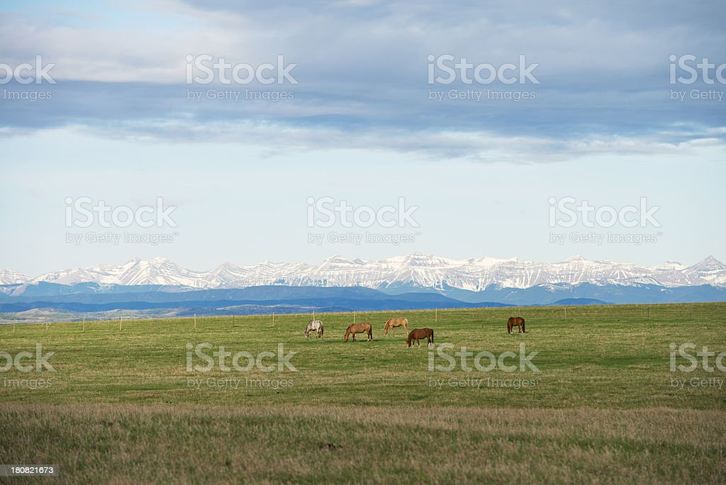Horses in the Mountains stock photo