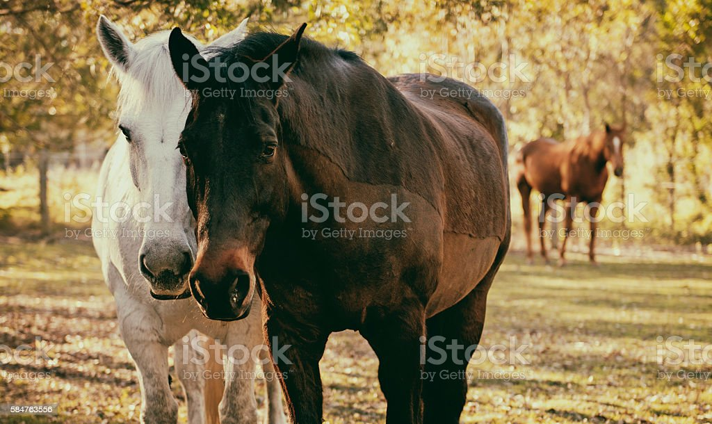 Horses in the paddock stock photo