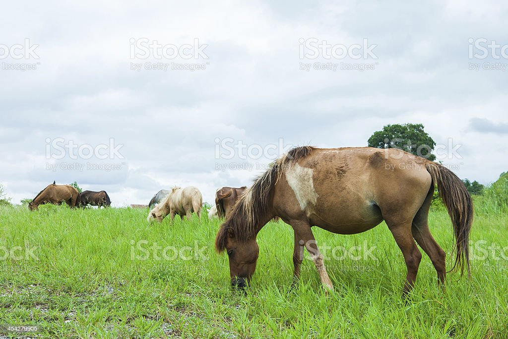 Horses in the pasture royalty-free stock photo