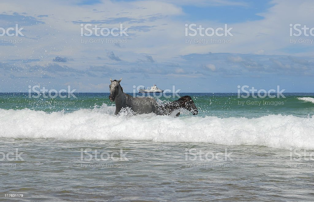 Horses and Waves royalty-free stock photo