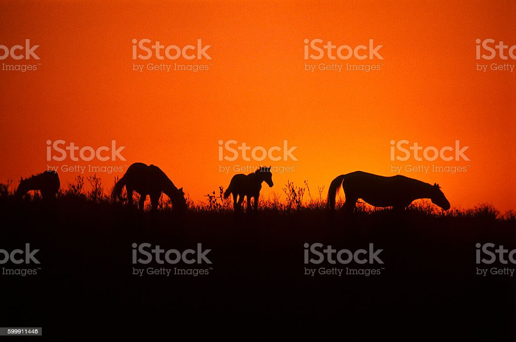 Horses in the steppe at dawn stock photo
