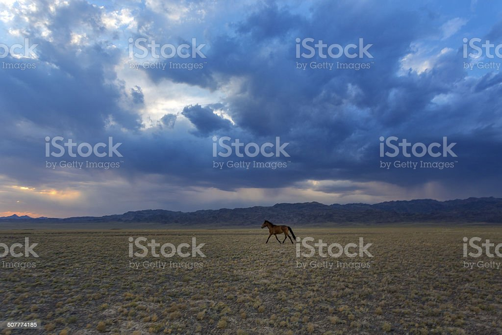 horses in the steppe stock photo