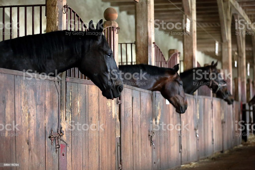 Horses in the vintage stable stock photo