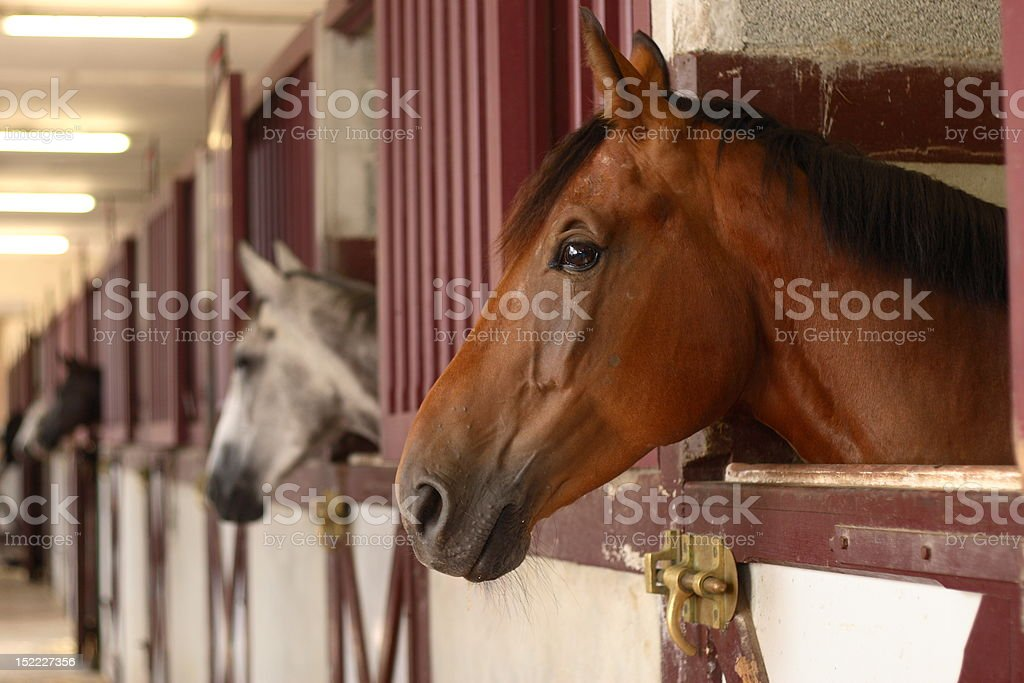 Horses in their stable stock photo