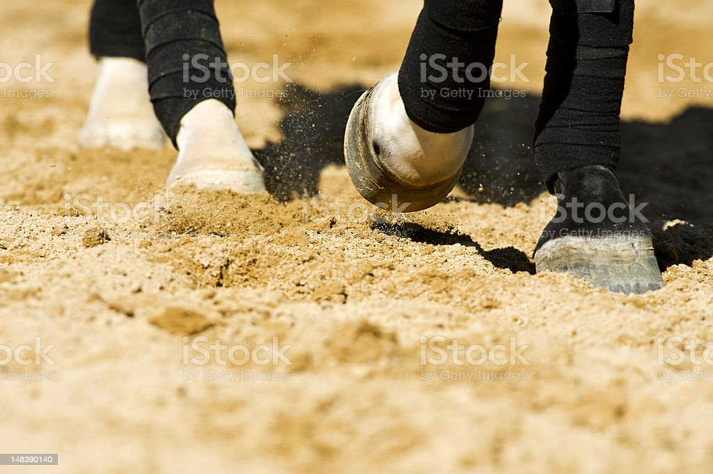 Horse's Leg details royalty-free stock photo