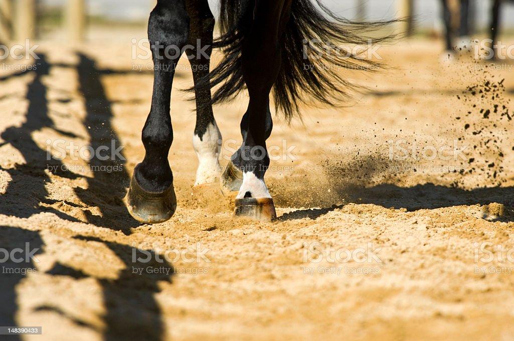 Horse's Leg details stock photo