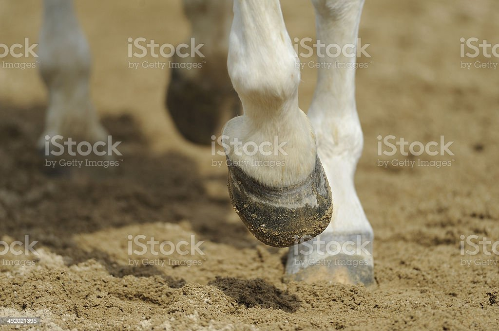 Horse's legs close up stock photo