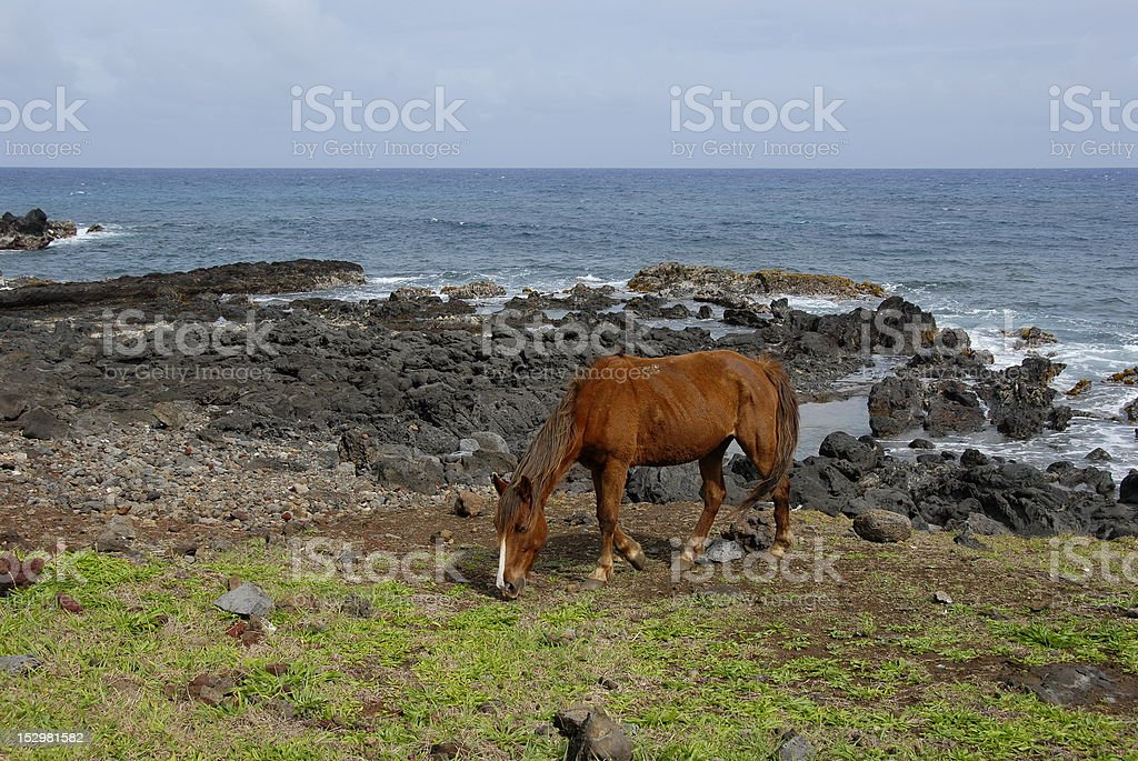 Horses of Easter island royalty-free stock photo