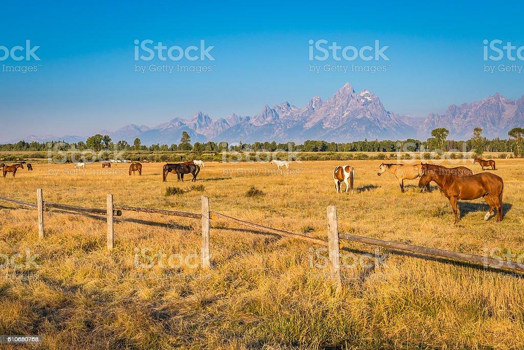 Horses of Wyoming stock photo