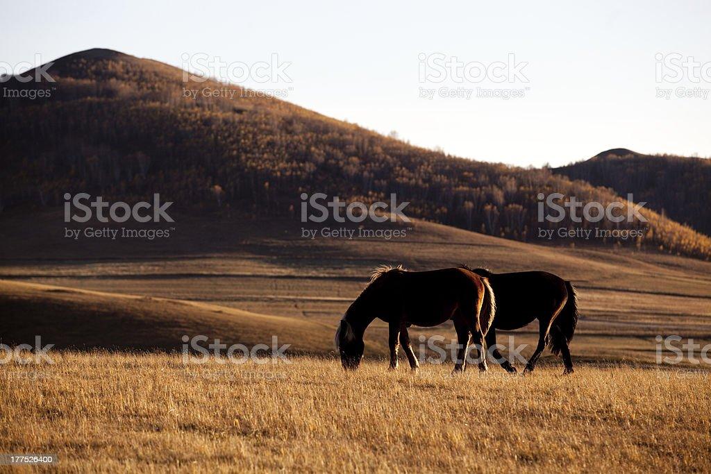 Horses on a autumn mountain pasture royalty-free stock photo
