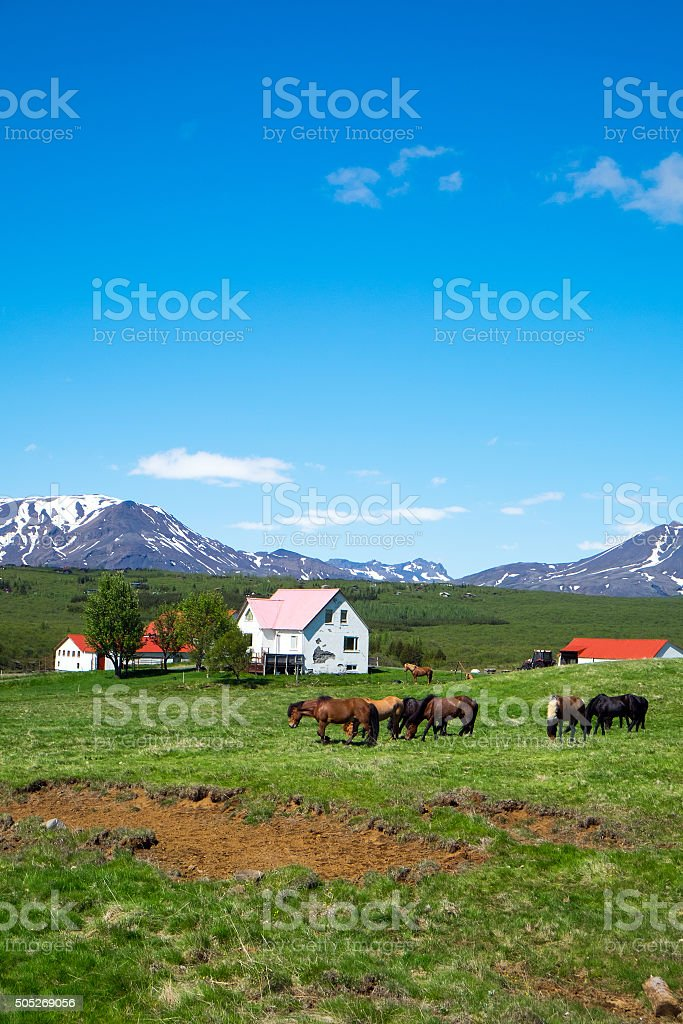 Horses on a farm in Iceland stock photo