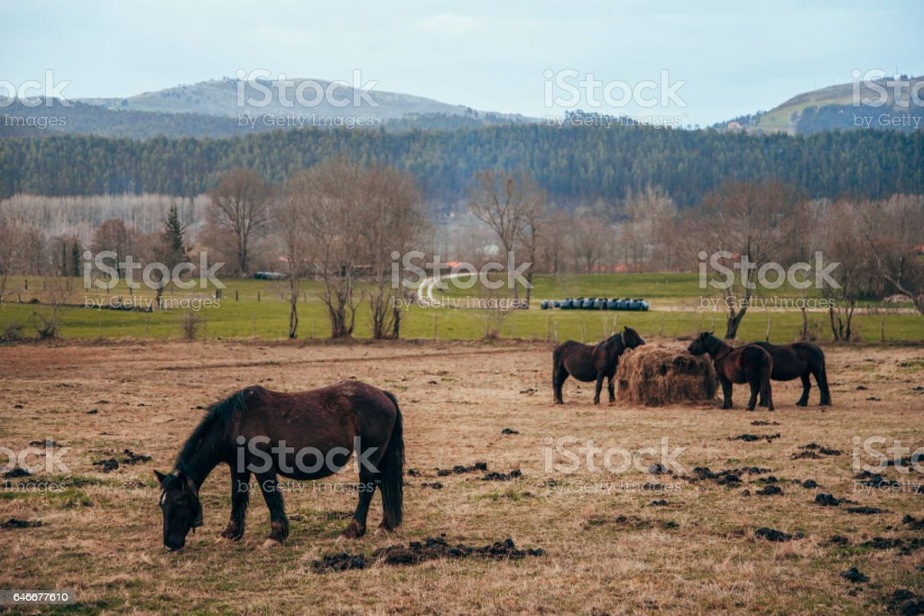 Horses on a field stock photo