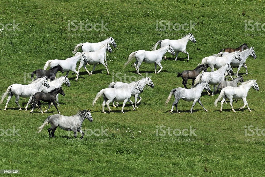 Horses on a grazing land stock photo