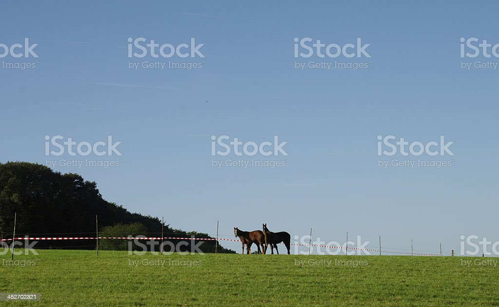 Horses on a hill stock photo
