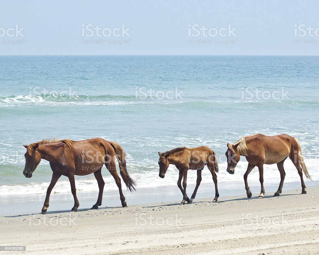 Horses on Beach stock photo