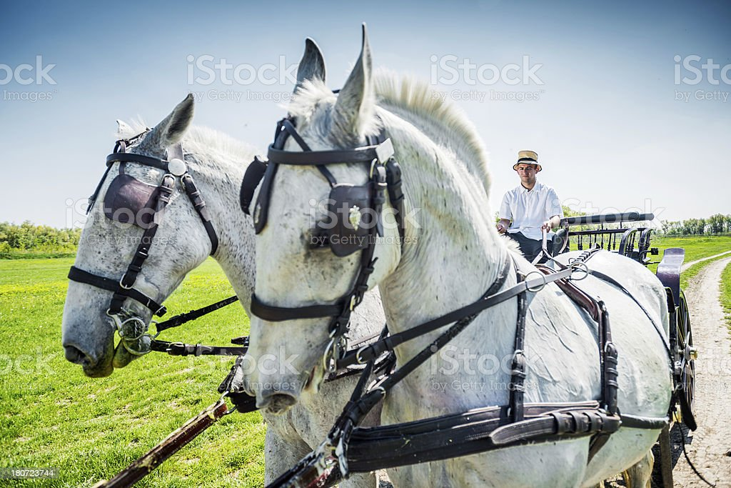 Horses on countryside stock photo