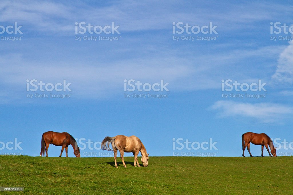 Horses on green meadow stock photo