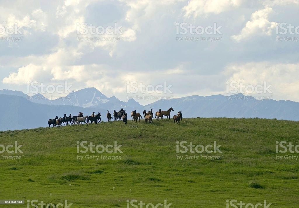 Horses on hill stock photo