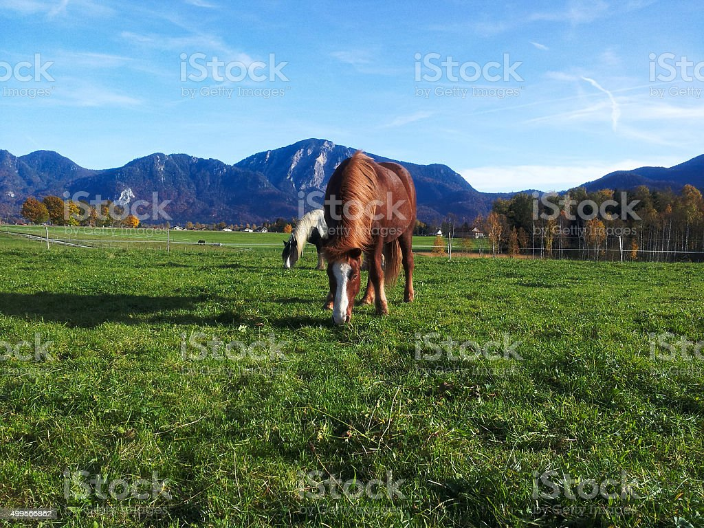 Horses on that puts out to pasture. stock photo