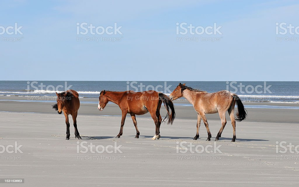 Horses on the Beach royalty-free stock photo