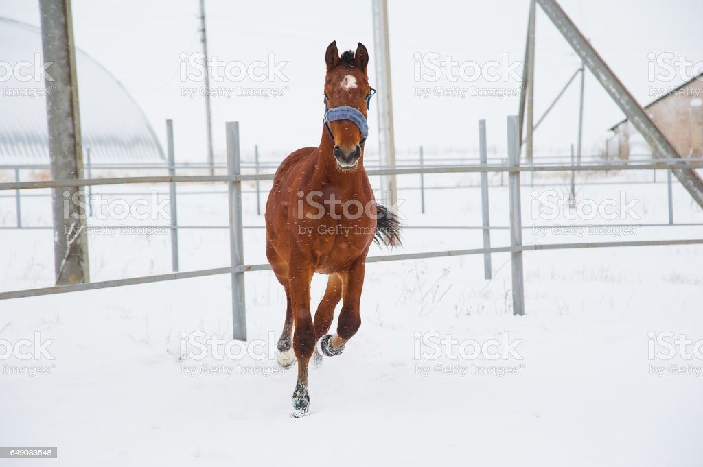 Horses on the farm in winter stock photo