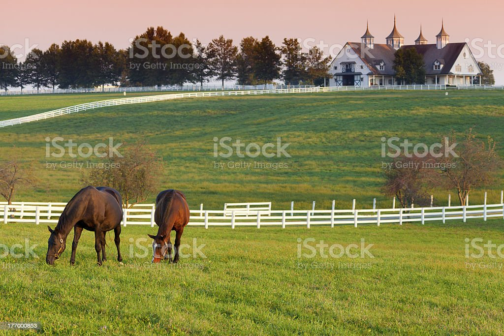 Horses on the Farm stock photo