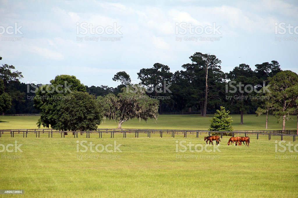 Horses on the Farm - Stock Image  land of horses stock photo