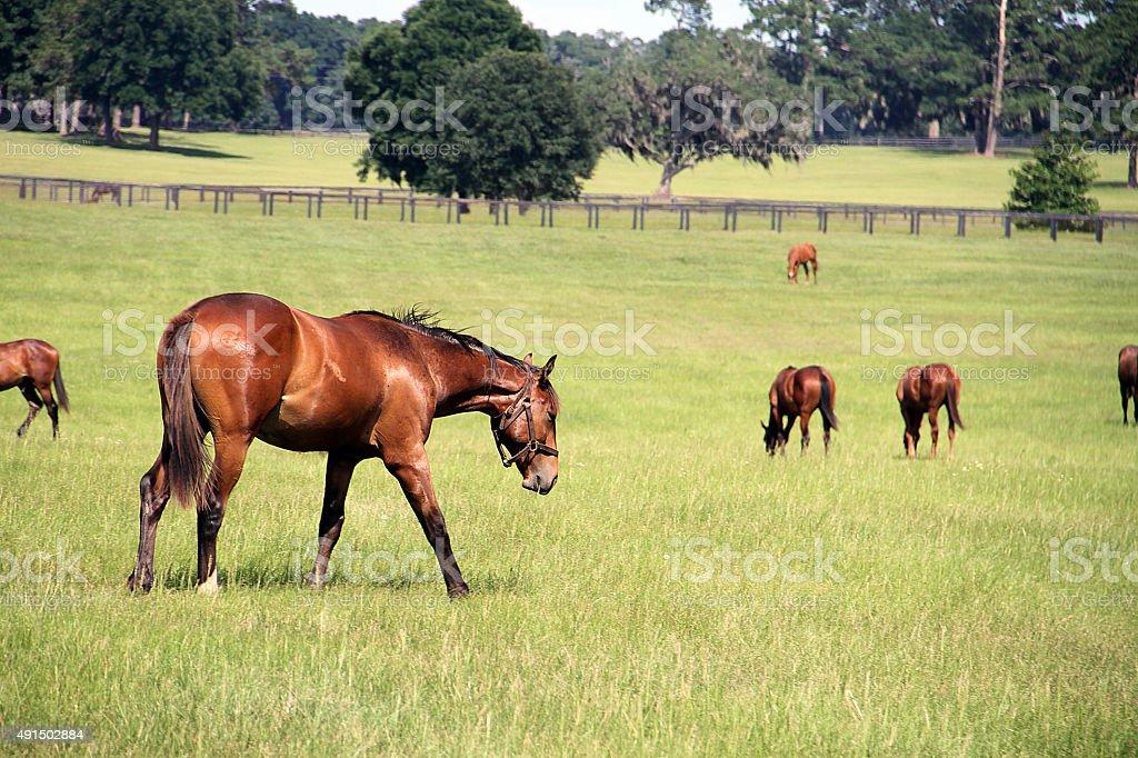 Horses on the Farm - Stock Image  land of horses stock photo