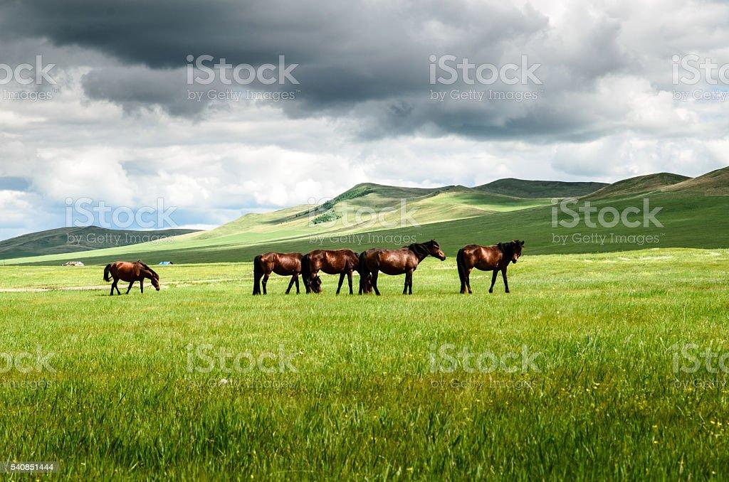 Horses on the grassland stock photo