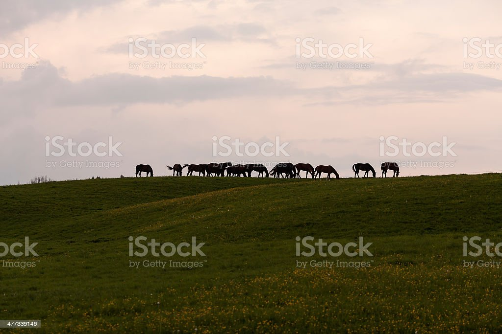 Horses on the hill royalty-free stock photo