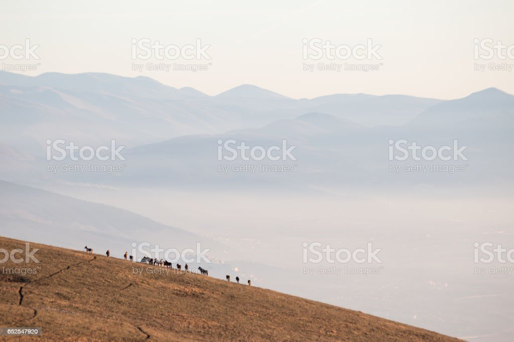 Horses over a sea of fog stock photo